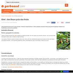 Kiwi : comment avoir fleurs et fruits sur un actinidia ?