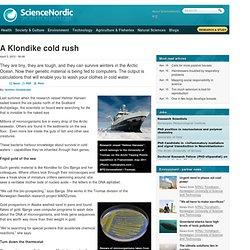 A Klondike cold rush