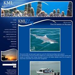 KML Blog