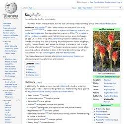 Kniphofia - Wikipedia