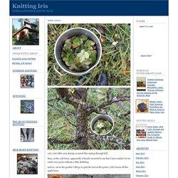 Knitting Iris: Natural Dyeing