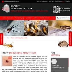 Know Everything About Ticks