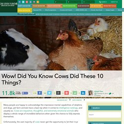 Wow! Did You Know Cows Did These 10 Things?