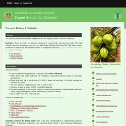 Knowledge Based Information on Coconut