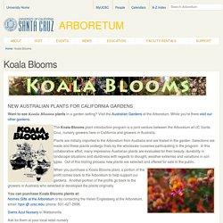 Koala Blooms