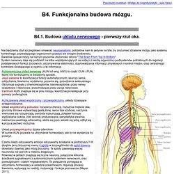 4. Funkcjonalna budowa mózgu