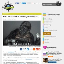 Koko The Gorilla Has A Message For Mankind