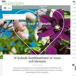 21 lyckade kombinationer av rosor och klematis – Allt om Trädgård