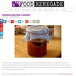 Kombucha Questions & Answers