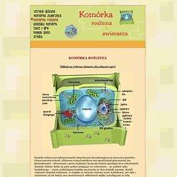komórka roślinna-budowa