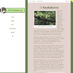 Kookaburra - Native Symbols