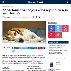 Köpeklerin 'insan yaşını' hesaplamak için yeni formül - Köpekler - VetRehberi