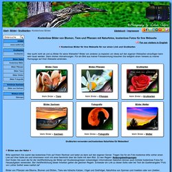 Kostenlose Bilder, kostenlose Fotos für die Homepage, Webseite Blumen und Insekten