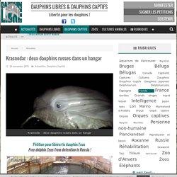 Krasnodar : deux dauphins russes dans un hangar