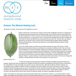 Kratom: The Miracle Healing Leaf