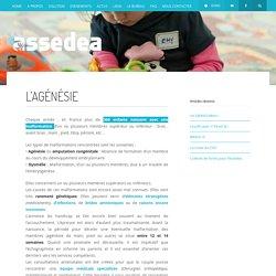 L'AGÉNÉSIE - Assedea