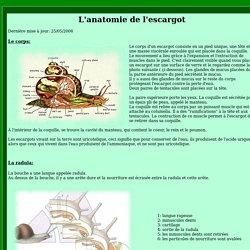 L'anatomie de l'escargot