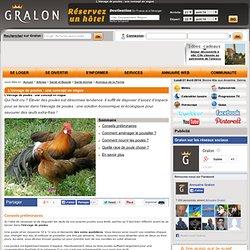 L'élevage de poules : une concept en vogue