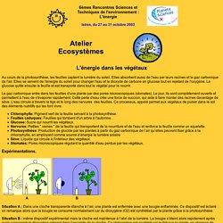 L'energie dans les végétaux avec le protocole