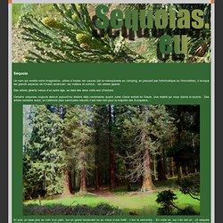 L'épopée des séquoias