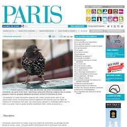 L'étourneau sansonnet - Paris.fr-Mozilla Firefox
