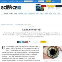 L'évolution de l'oeil
