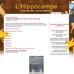 L'Hippocampe » Stages