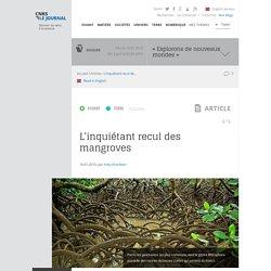 CNRS 16/01/15 L'inquiétant recul des mangroves
