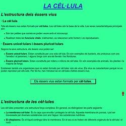 La cèl·lula - 1r ESO