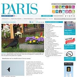 La corneille à un corps beau ! - Paris.fr-Mozilla Firefox