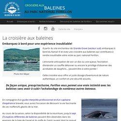 La croisière aux baleines - Baleines Forillon