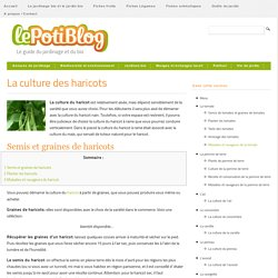 La culture des haricots