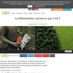 La déforestation, qu'est-ce que c'est