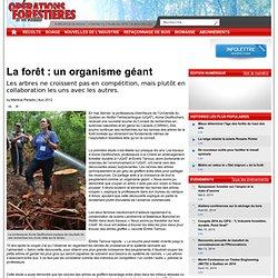 Dêcouverte sur la forêt: un organisme géant