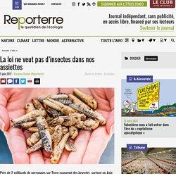 REPORTERRE 05/06/17 La loi ne veut pas d'insectes dans nos assiettes
