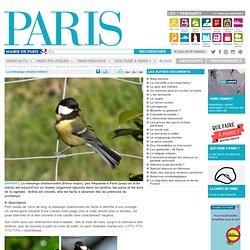 La mésange charbonnière ! - Paris.fr-Mozilla Firefox