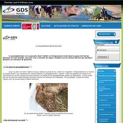 GDS MANCHE - FEV 2013 - Les 2 formes de la paramphistomose des bovins