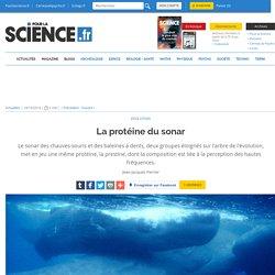 La protéine du sonar
