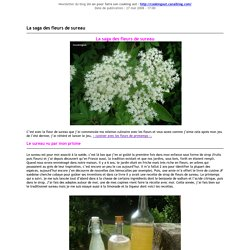 La saga des fleurs de sureau