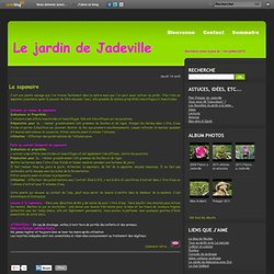 La saponaire - Le Jardin de Jadeville