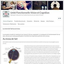 La vision de l'oeil au cerveau