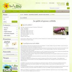 La vrillette - Penntybio