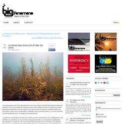 La Weed Que Crece En El Mar De Chile