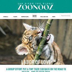 Labor Of Love – ZOONOOZ