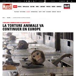 12 millions d'animaux dans les laboratoires - La torture animale va continuer en Europe