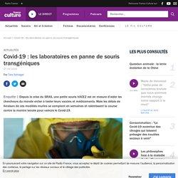 Covid-19 : les laboratoires en panne de souris transgéniques