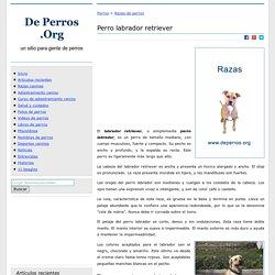 Perro labrador - Información general de la raza labrador retriever