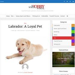 Labrador: A Loyal Pet - My Hobby Portal