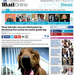 Stray labrador rescues blind pooch by becoming first canine-to-canine guide dog | Mail Online