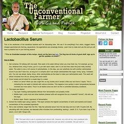Lactobacillus Serum